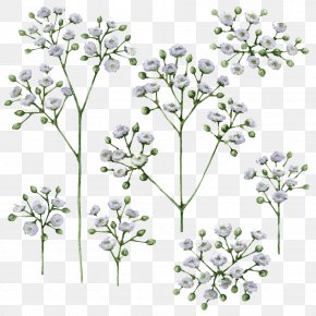 Babys Breath Png Gypsophila - Baby's-breath Vector Graphics Stock Illustration Drawing PNG