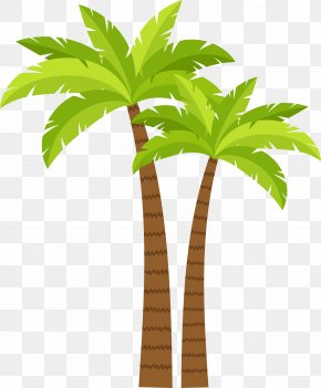 Coconut Tree Decoration Pattern - Arecaceae Coconut Tree PNG