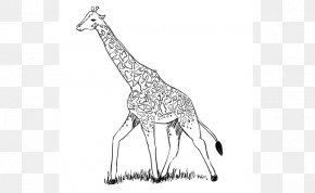 Giraffe Cartoon Drawing - Northern Giraffe Even-toed Ungulates Drawing Line Art Animal PNG