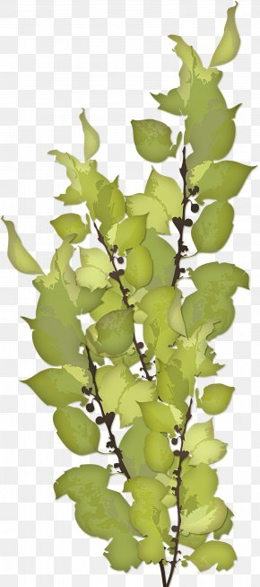 Green Leaves - Excretion Feast Of Our Lady Of Sorrows Excretory System Ureter Anatomy PNG