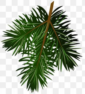 Transparent Pine Branch Picture - Pine Branch Clip Art PNG