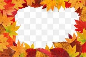 Autumn Leaves Frame Leaf - Autumn Leaf Color Picture Frame PNG