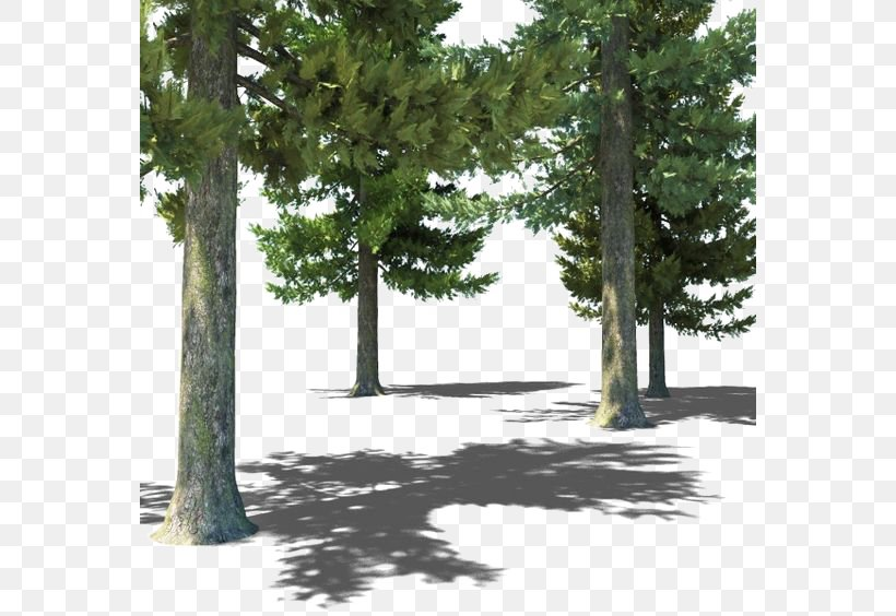 Populus Nigra Tree Forest 3D Computer Graphics, PNG