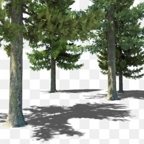 Forest - Populus Nigra Tree Forest 3D Computer Graphics PNG