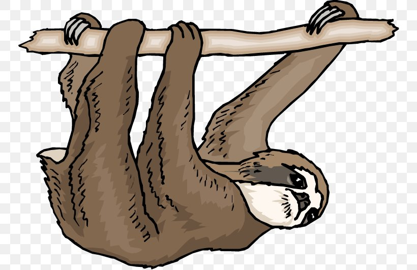 Pygmy Three-toed Sloth Free Content Clip Art, PNG, 750x531px, Sloth, Animal, Arm, Art, Bear Download Free
