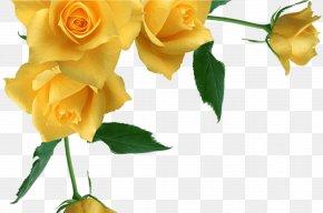 Pedicel Bouquet - Bouquet Of Flowers Drawing PNG