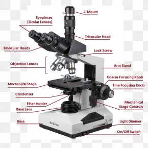 Microscope Clincal - Light Phase Contrast Microscopy Optical Microscope Dark-field Microscopy PNG