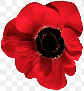 Anemone - Flowering Plant Poppy Petal Red PNG