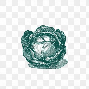 Pull The Cabbage Free Download - Cabbage Cauliflower Vegetable PNG