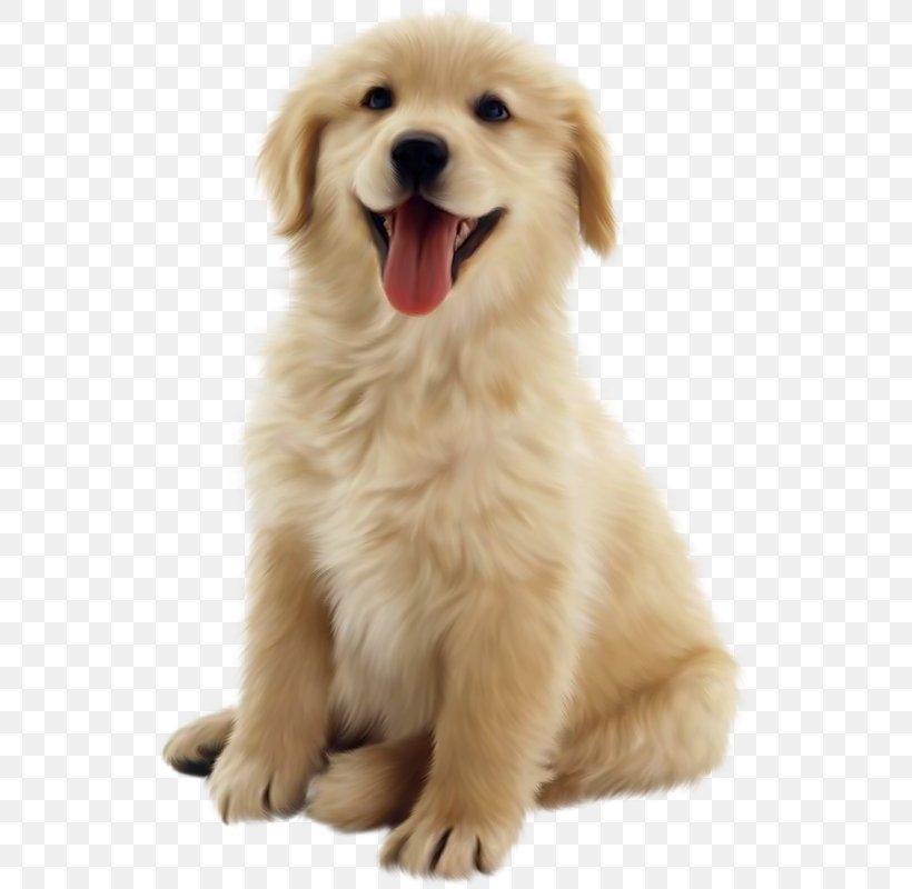 Golden Retriever Puppy Pet Clip Art, PNG, 537x800px, Golden Retriever, Ancient Dog Breeds, Animal, Carnivoran, Cat Download Free
