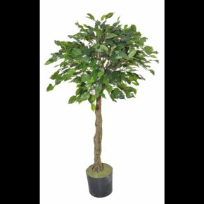 Thicket Ficus - Tree Topiary Olive Albizia Julibrissin Ornamental Plant PNG