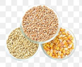 Corn - Cereal Maize Grain PNG