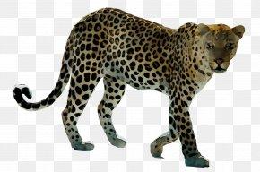 Leopard Tiger Lion Polar Bear PNG