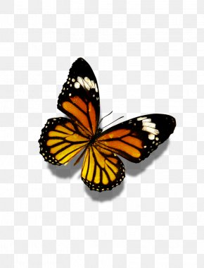 Butterfly - Butterfly Flower Display Resolution Wallpaper PNG