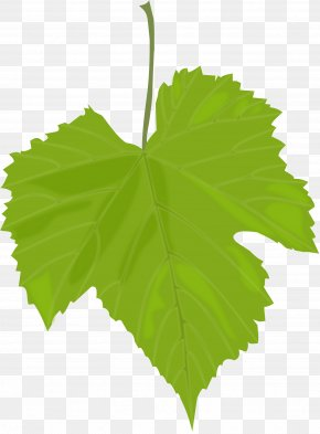 Green Leaf - Common Grape Vine Wine Dolma Grape Leaves Greek Cuisine PNG
