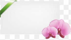 Orchid - Stock Photography Vector Graphics Depositphotos Illustration Royalty-free PNG