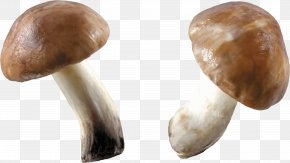 Mushroom Image - Stuffed Mushrooms Computer File PNG