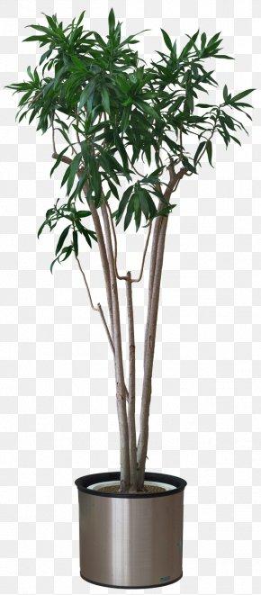Flower Pot - Plant Arecaceae Areca Palm Stock Photography PNG