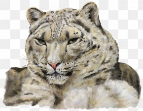 Leopard - Where Snow Leopard Prowls: Wild Animals Of Tibet Tiger PNG