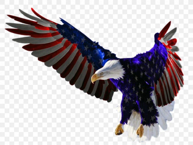 Flag Of The United States Independence Day Bald Eagle, PNG, 960x720px, United States, Accipitriformes, American Eagle Outfitters, Bald Eagle, Beak Download Free