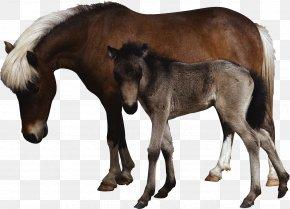 Horse - Horse Laptop Dog Ultrasonography Ultrasound PNG
