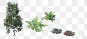 Tree Top - Tree Plant Shrub Forest PNG