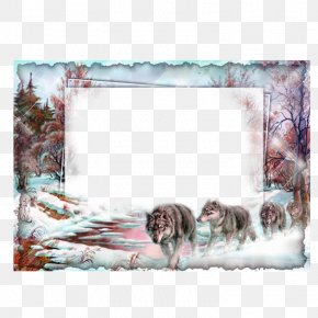 Snow Wolf Frame - Picture Frame Collage Film Frame PNG