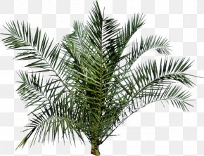 Palm Trees PNG