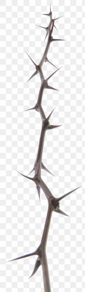 Needle Branch - Paper Digital Image Branch PNG