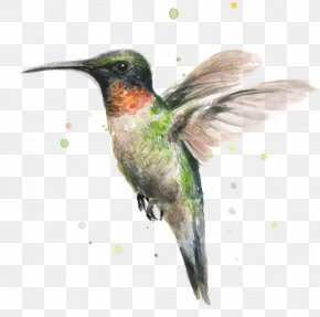 Hummingbird - Hummingbird Watercolor Painting Printmaking PNG
