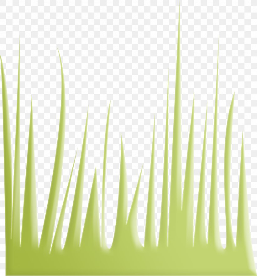 Euclidean Vector Gratis Download, PNG, 1800x1934px, Gratis, Grass, Green, Plant, Project Download Free