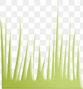 Green Grass - Euclidean Vector Gratis Download PNG