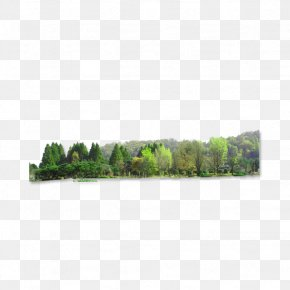 Forest - Landscape Download PNG
