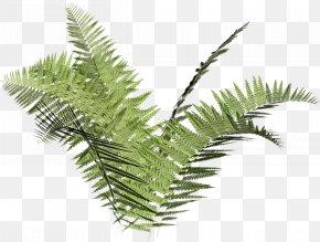 Arecales Palm Tree - Cartoon Palm Tree PNG