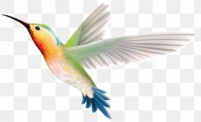 Bird - Hummingbird Wing Beak Feather Wallpaper PNG