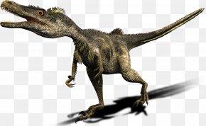 Dinosaur - Dinosaur Deinonychus Late Cretaceous Velociraptor Mongoliensis PNG