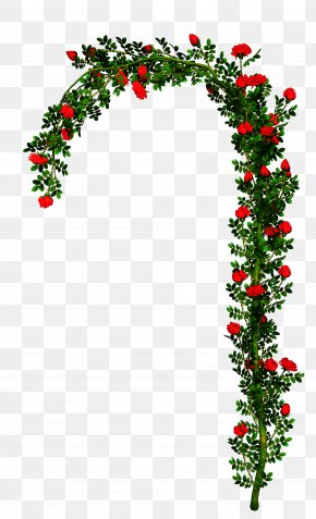 Ivy Christmas Decoration - Christmas Decoration Drawing PNG