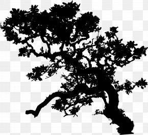 Gum Tree Eucalyptus Camaldulensis - Branch Leaf Tree Oak Clip Art PNG