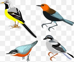 Birds - Bird Drawing Clip Art PNG