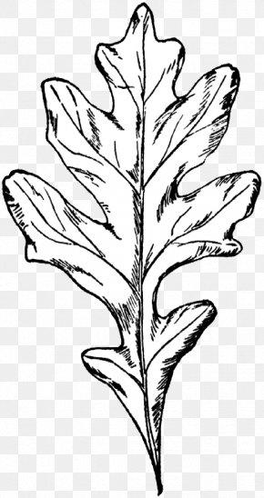 English Oak Clip Art Leaf Acorn - Autumn Color Transparent PNG
