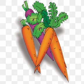 Vegetable Carrot - Carrot Vegetable Cartoon PNG