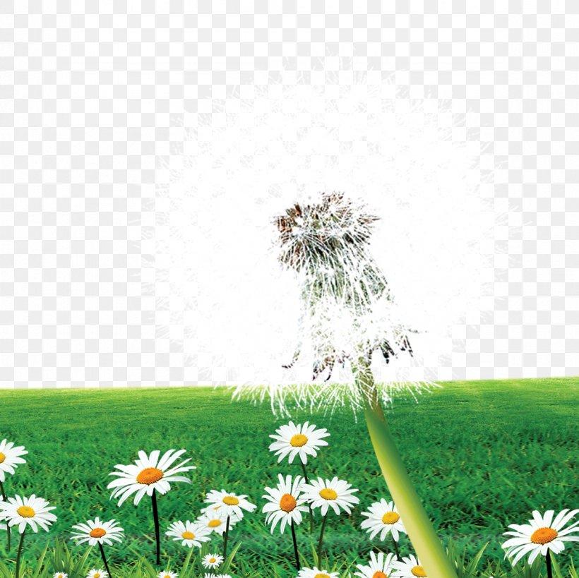Dandelion Flower Meadow, PNG, 1181x1181px, Taraxacum Platycarpum, Daisy, Daisy Family, Dandelion, Energy Download Free