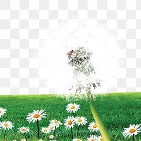 Dandelion Meadow - Dandelion Flower Meadow PNG
