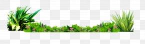 Beautifully Fresh Grass Beautiful Flowers Bottom Decoration - Grasses Wallpaper PNG