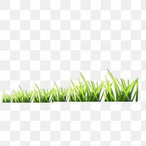 Grass - Gratis Download Icon PNG