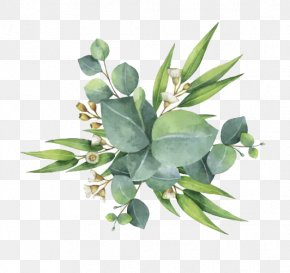 Watercolor Green Leaves - Gum Trees Euclidean Vector Leaf Flower PNG