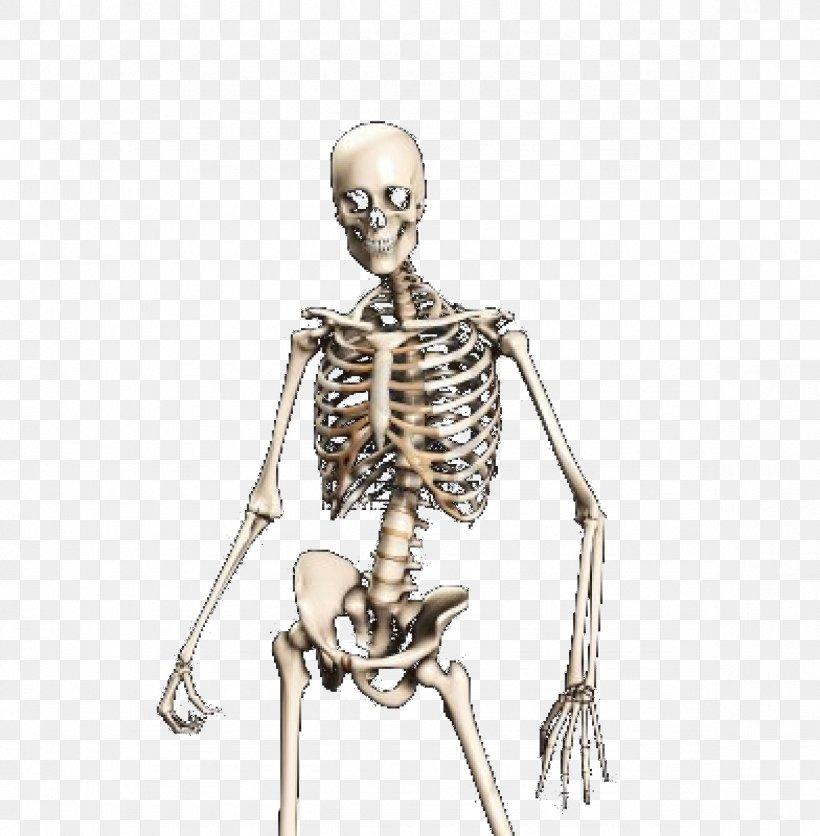Human Skeleton Skull Bone, PNG, 1176x1200px, Skeleton, Anatomy, Bone, Drawing, Figurine Download Free