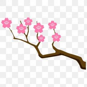 Meaning Idiom Synonym Etymology Cherry Blossom PNG