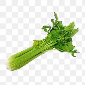 Vegetable - Wild Celery Organic Food Vegetable Salad PNG