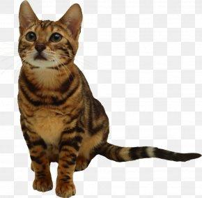 Kitten - Kitten Cat Desktop Wallpaper Clip Art PNG